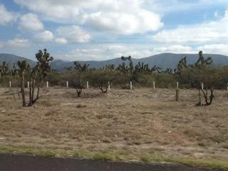 Scenery on road from San Luis Potosi to Monterrey